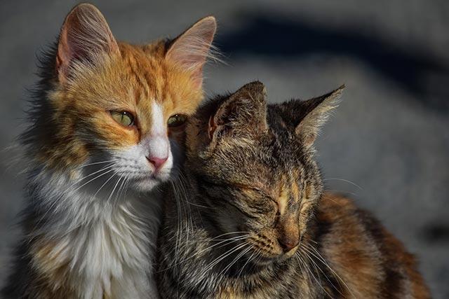 Stöd Kattjouren